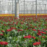 Klimaatbeheersing agro